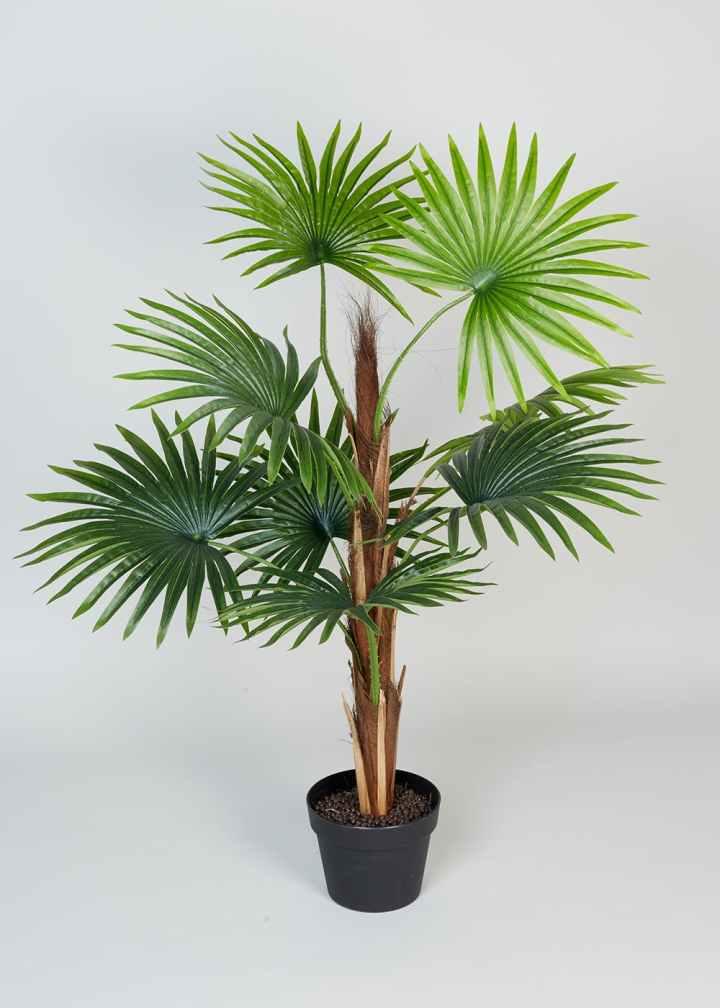 Matalan Palm Tree
