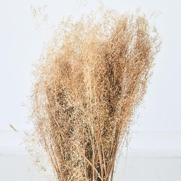 Flowering-Grass-Dried_1024x1024
