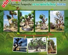 ต้นไม้จัดสวน แต่งสวน จัดสวน บ้านและสวน บริการขุด ล้อม ย้าย ตั้งค้ำต้นไม้ล้ม
