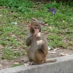 Year of the Monkey - Monkey Mountain