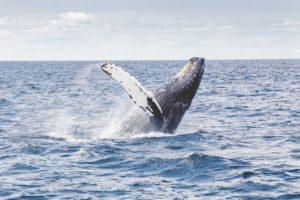 Whale breach, Liebster Award