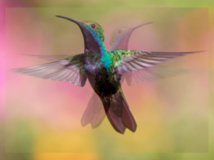 40 blogs in 40 days - Hummingbird