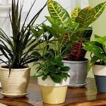 Tanaman Hias Ini Bisa Membuat Udara di Rumah Lebih Bersih