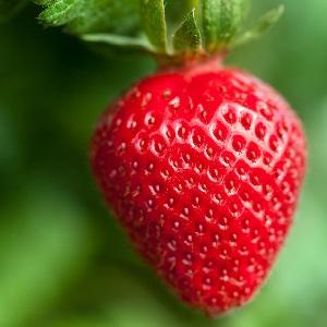 Beragam Manfaat Buah Stroberi untuk Kecantikan Kulit
