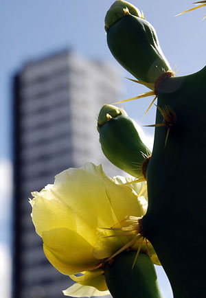 Foto de Waldson Dias via Flickr
