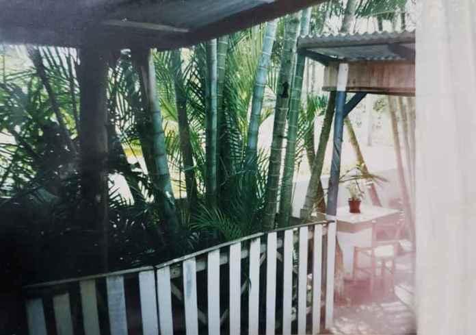 As taquaras de Taquaras, no quintal da família Rocha (Arquivo Pessoal)