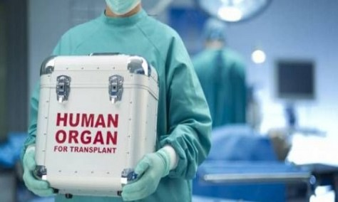 organos_trafico
