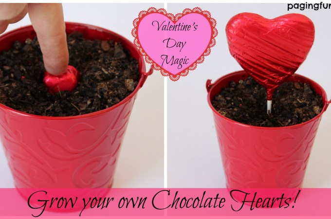 Valentine's Day Magic…grow your own Chocolate Hearts!