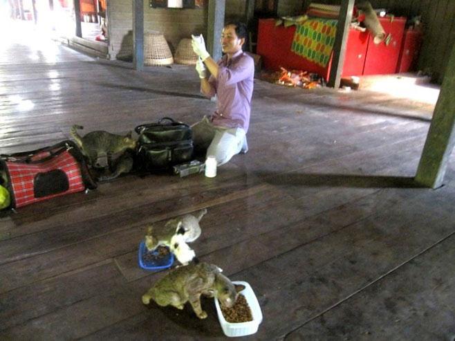 Pagoda Cats Siem Reap - Dr. Hoksy Votha