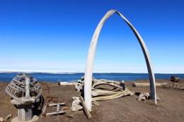 bowhead whale arc