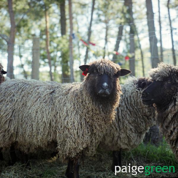paigegreen_0009web2.jpg