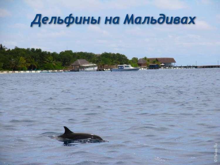 Где посмотреть дельфинов в море