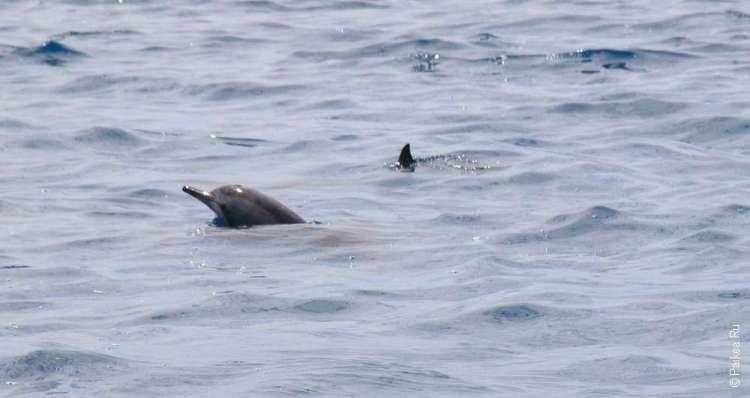 Наша встреча с дельфинами в море