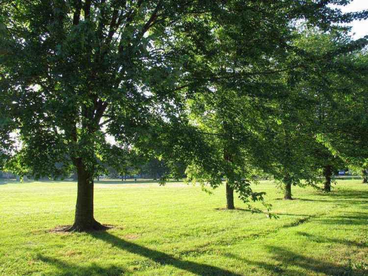Индианаполис - Деревья в солнечном свете