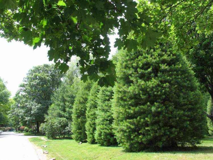 Индианаполис елки вдоль тротуара