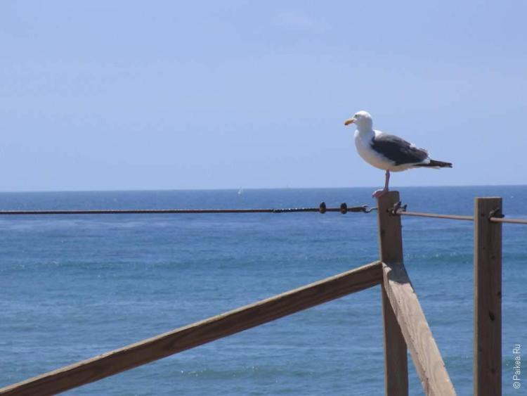 птица чайка сидит