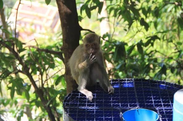 обезьяна на мусорной урне