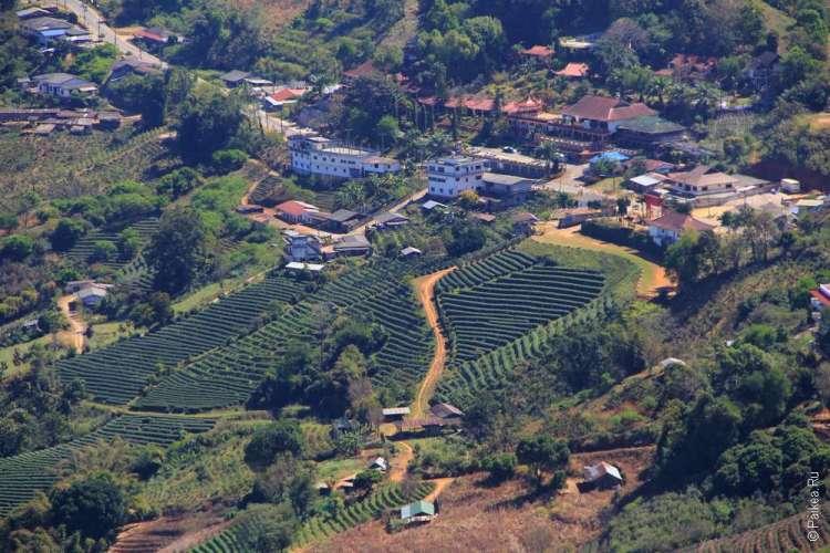 Мэ Салонг чайные плантации