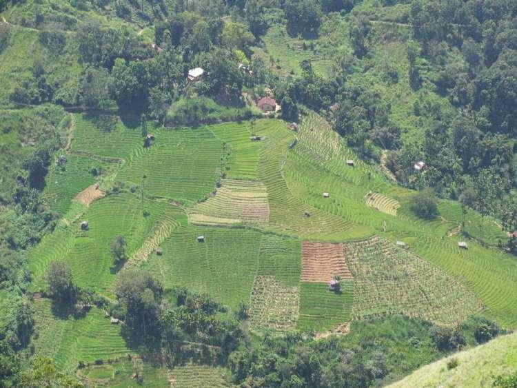 Малый пик Адама, Элла, Шри-Ланка 08