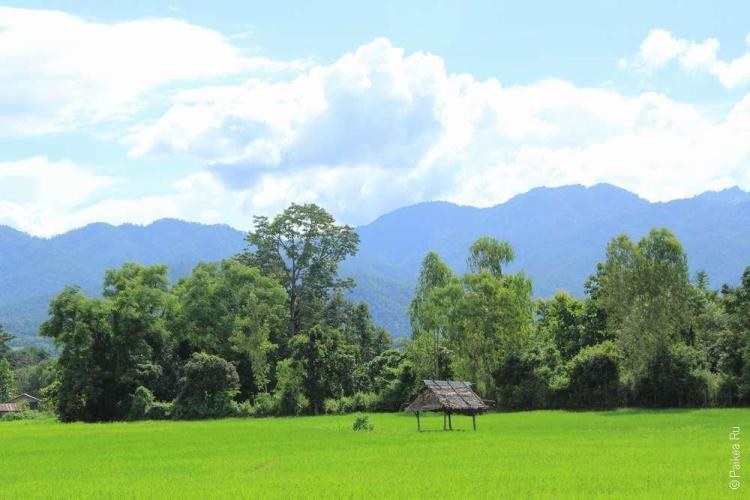 Типичная, но милая сердцу картина Северного Таиланда