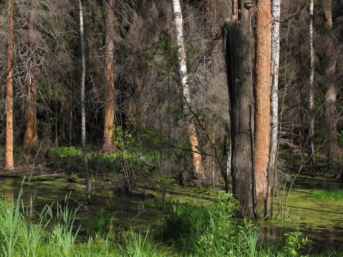 Вот оно, настоящее московское болото!