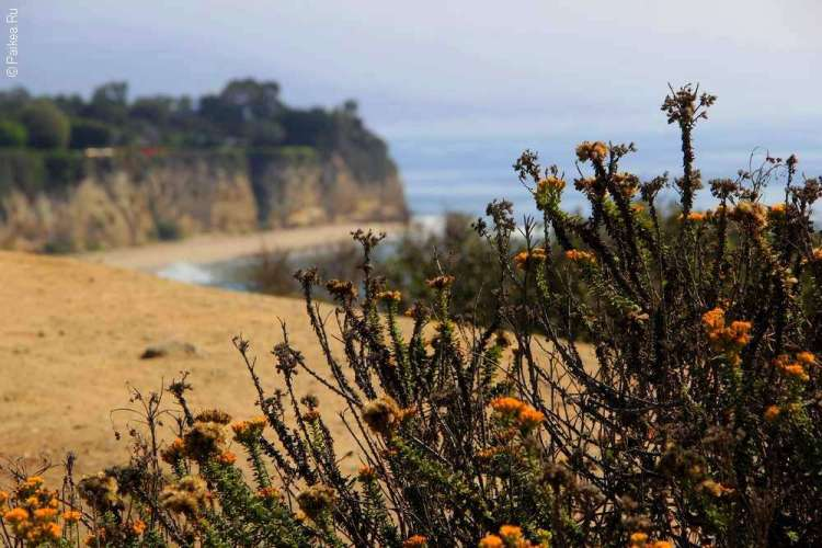Желтые цветы на побережье