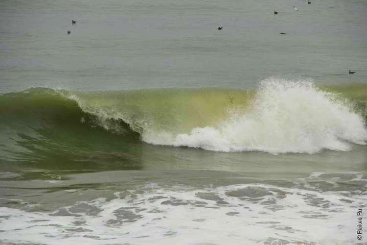 Волна в Тихом океане