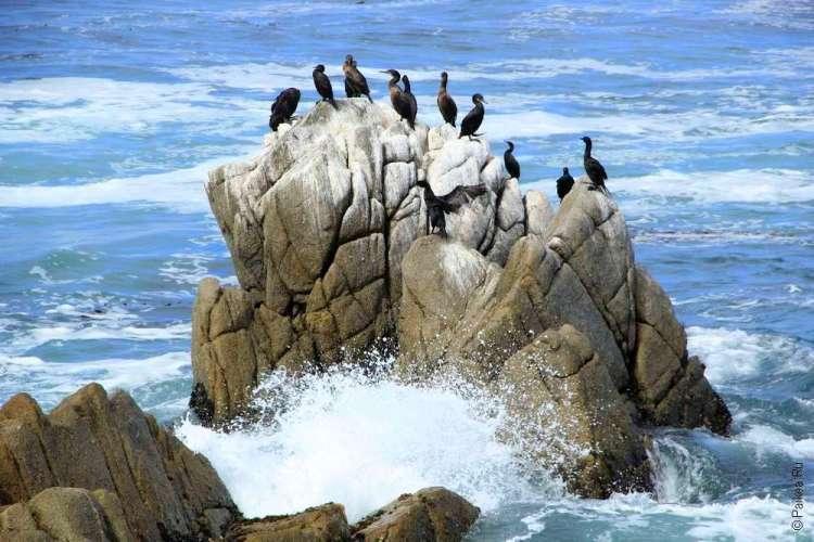 Скала и птицы