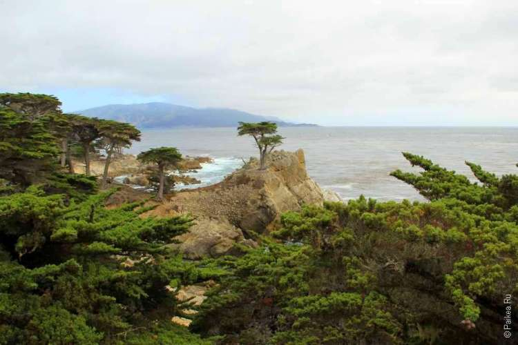 Одинокий кипарис - символ Калифорнии