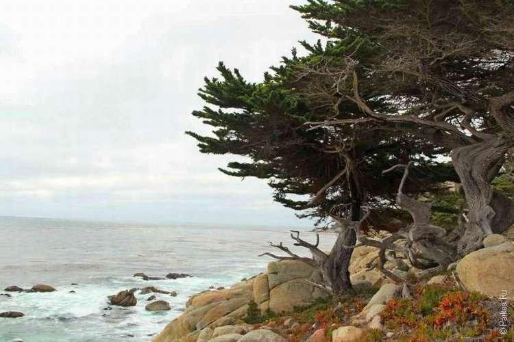 На берегу Тихого океана / 17 miles Drive, Калифорния, США