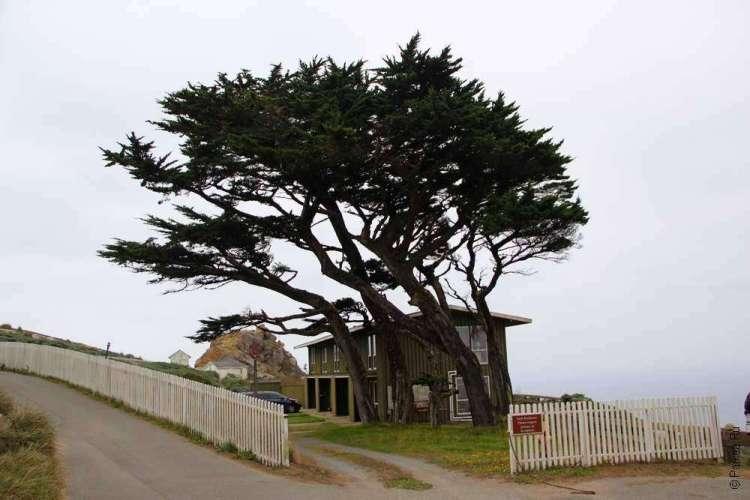 Дерево защищает дом