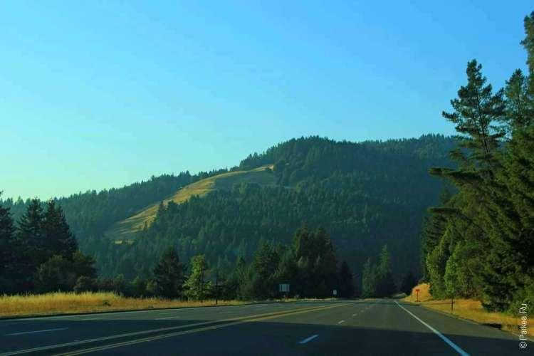 Холмы покрыты лесом