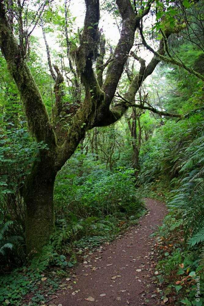 Зеленые деревья в дождевом лесу