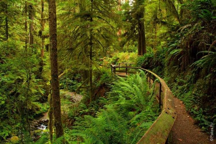 национальный парк олимпик - Вечнозеленый штат Вашингтон
