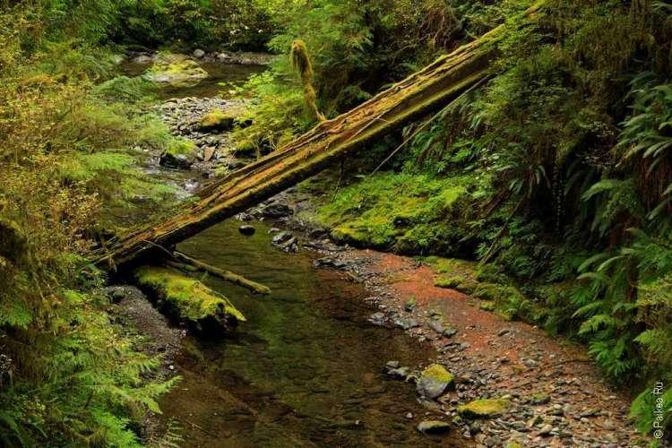 дождевой лес в национальном парке олимпик 06