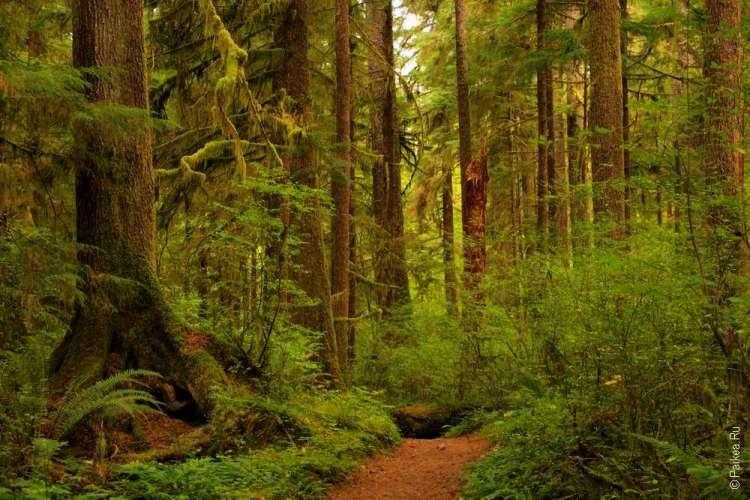 дождевой лес в сша