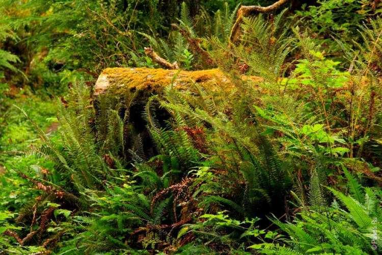 дождевой лес в национальном парке олимпик 15