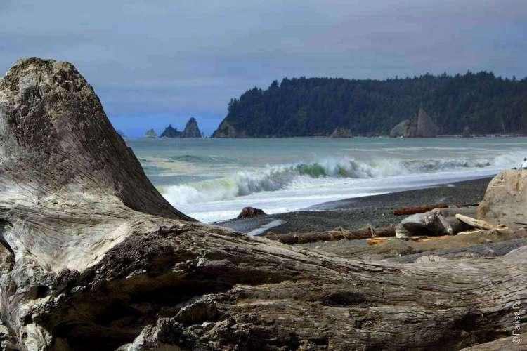 Ствол огромного дерева на берегу Вашингтона