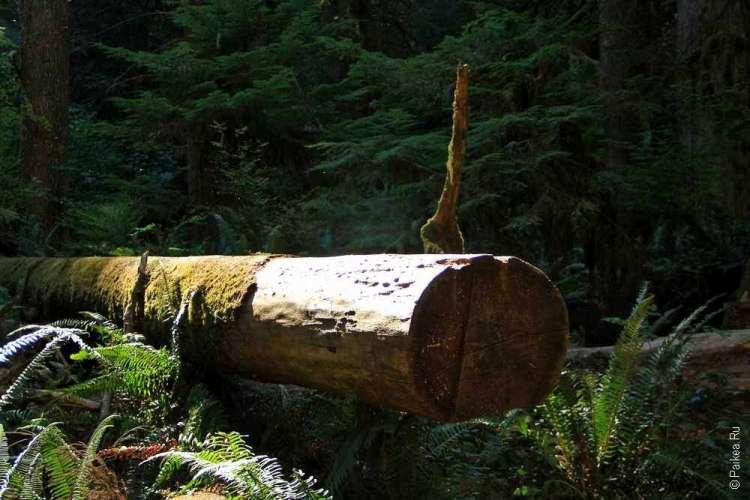 Озеро Полумесяца - Спиленное дерево
