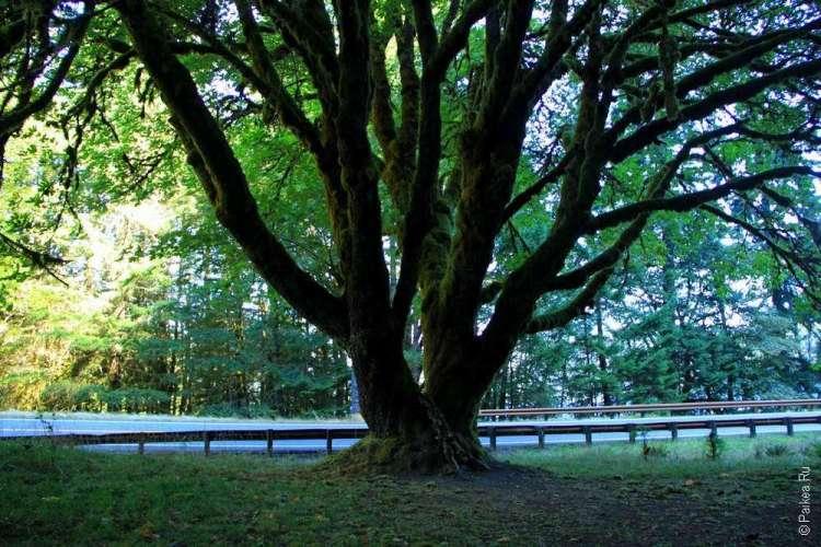 Озеро Полумесяца - Раскидистое дерево
