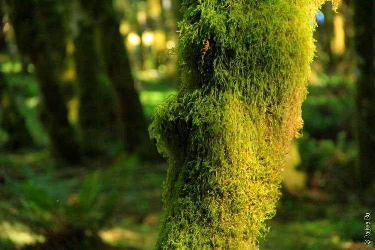 Озеро Полумесяца - Мох на ветках деревьев