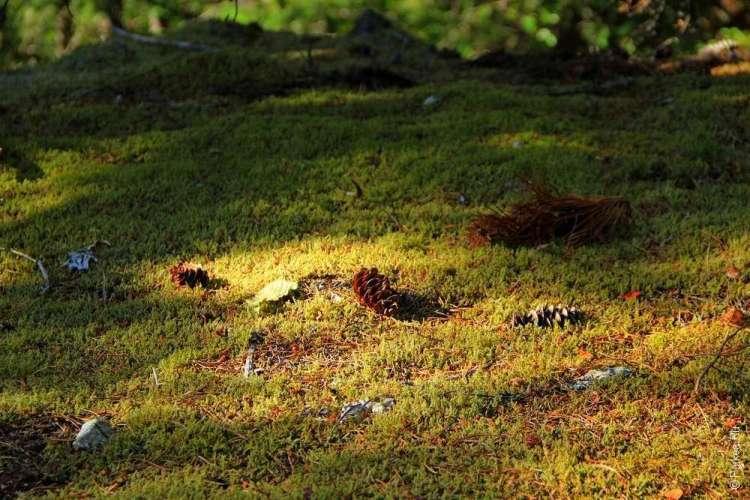 Национальный парк Норт-Каскейдс, Северные Каскады, North Cascades National Park 03