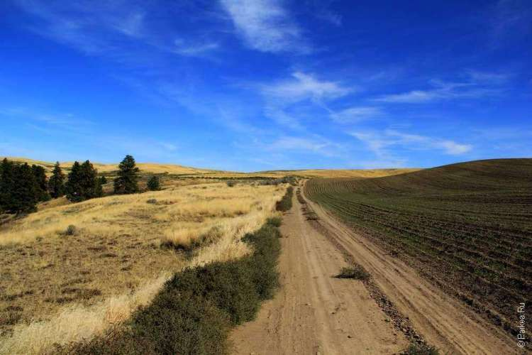 Пыльная дорога между полей