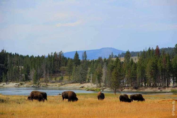 национальные парки сша йеллоустоун