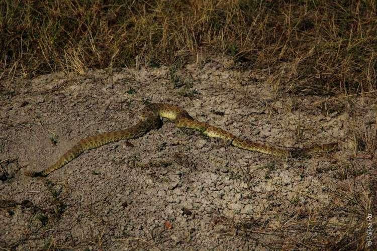 Национальный парк Бэдлендс, Южная Дакота, США - змея