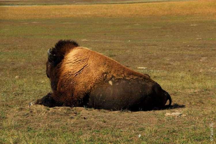 Национальный парк Бэдлендс, Южная Дакота, США 03
