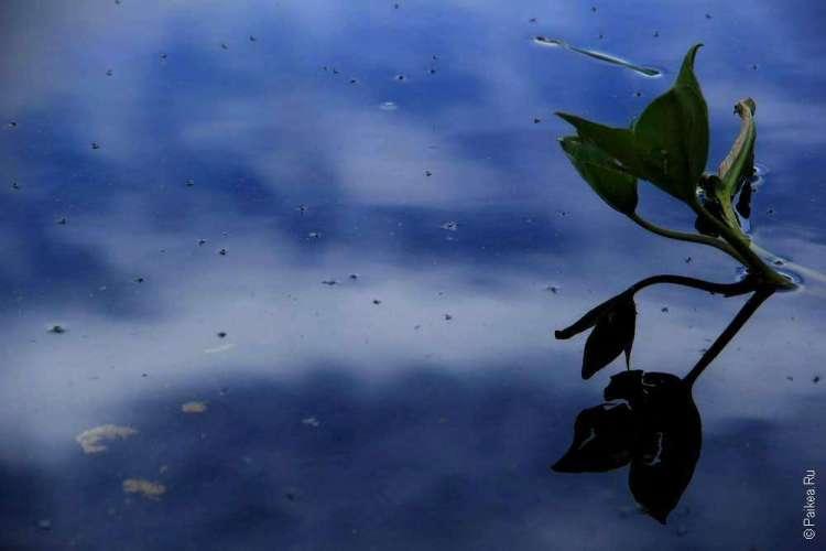 Растение на поверхности озера
