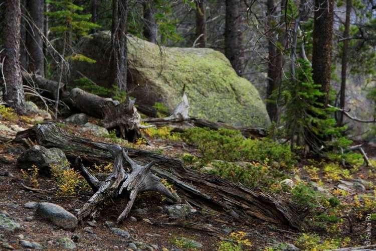 Прогулка в Национальном парке США