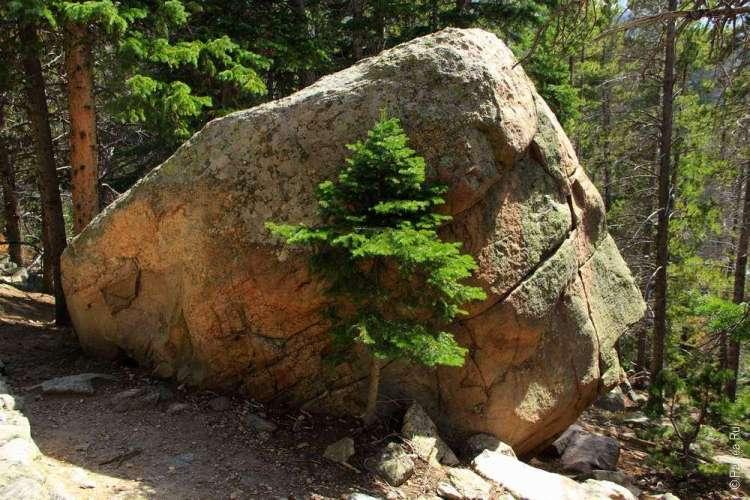 елка под камнем