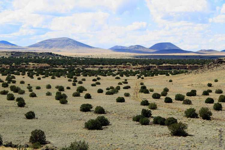 Аризона США